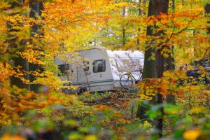 RV through the trees