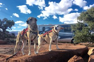 dogs in front of RV in harnesses.